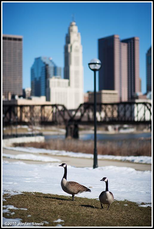 IMAGE: http://www.jordansteele.com/forumlinks/geese_northbank.jpg