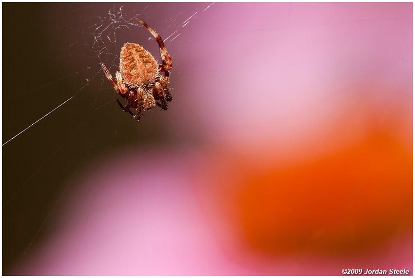 IMAGE: http://www.jordansteele.com/forumlinks/spider_coneflower.jpg