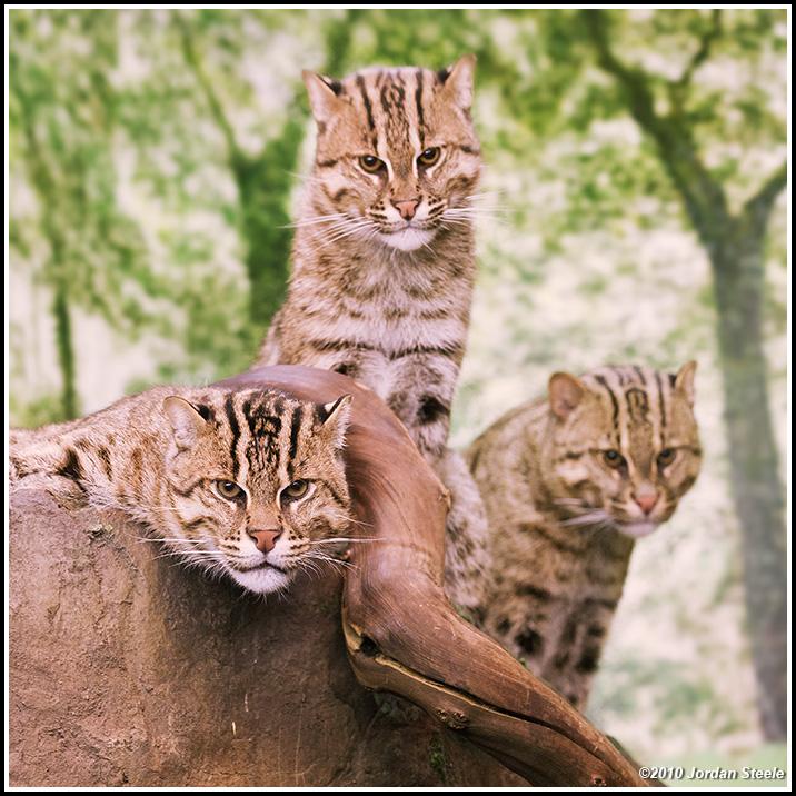IMAGE: http://www.jordansteele.com/forumlinks/three_cats.jpg