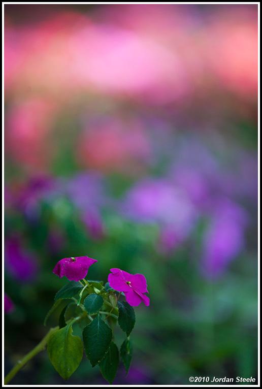 IMAGE: http://www.jordansteele.com/forumlinks/zoo_flowers.jpg