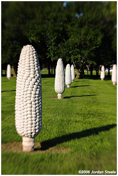 IMAGE: http://www.jordansteele.com/images/recent/dublin_corn_lb.jpg